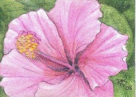 ACEO Hibiscus by Robert A. Sloan