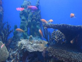 How to start a salt water fish tank ehow for Starting a saltwater fish tank