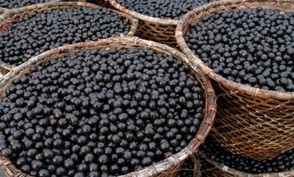 Use Acai Berry for Weight Loss