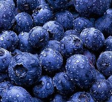 Make Blueberry Jam a Canning Recipe