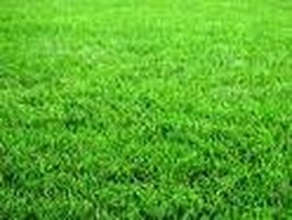 About Grass Seeds for Hard-to-Grow Areas