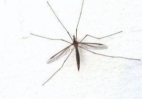 Signs & Symptoms of Dengue Fever