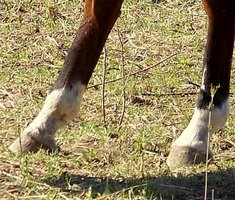 Horse Hoof Diseases & Problems