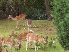 How to Keep Deer Away eHow
