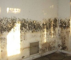 Health Side Effects of Black Mold