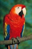 There are 17 known species of macaw parrot.