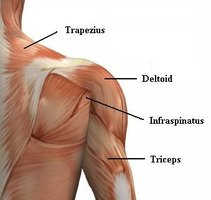 Most Common Shoulder Injuries