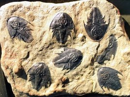 best method for dating fossils Answers for kids: dating methods  the best method is to check the account of a  so if scientists wanted to measure the age of a fossil using this method,.