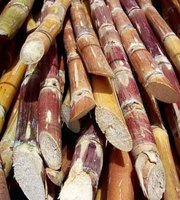 What is Sugar Cane?