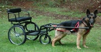 Teach a Dog to Pull a Cart