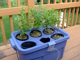 A simple hydroponic system requires only a few supplies.