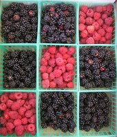 Blackberries Vs. Black Raspberries