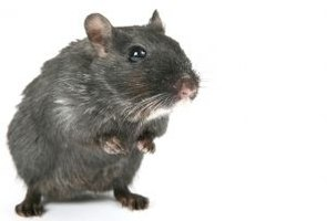 You don't have to kill mice to remove them from your house