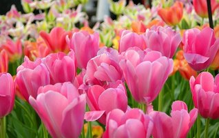 Planting your own flower garden can be exciting