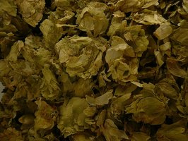 Dried hops.