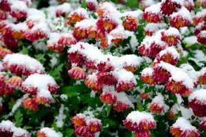 Heat Outdoor Plants in Winter