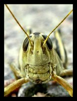 Grasshoppers need barbs to exist.