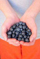 Blueberries are good to eat for a healthy spleen.