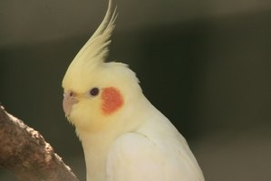 how to get rid of mites on pet birds