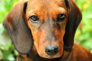 Dogs can have allergic reactions to flea and tick treatment.