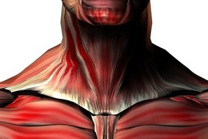 The Adam's Apple houses the larynx, which is also known as the voice box.