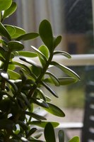 Houseplants are susceptible to a variety of pests.