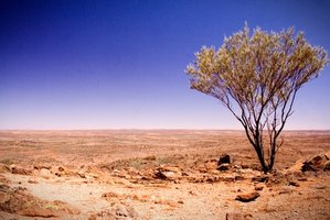 The arid Australian Outback doesn't support much vegetation.