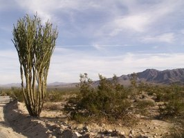 The desert ecosystem contains more life than meets the eye.