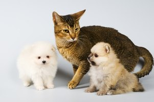 Both dogs and cats can experience side effects due to Heartgard Plus.