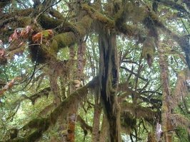 Rain forest trees are full of life.