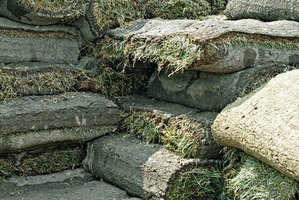 Stacks of rolled sod.