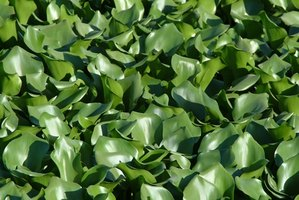 Aquatic weeds can be managed.