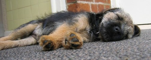 Urine Odors From Your Dog Can Linger In Your Carpet