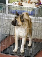 A dog should feel secure, and not trapped, when inside his crate.