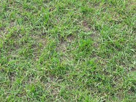Lawn Care Brown Patch Problems Ehow