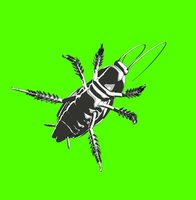 What do I need to do to become pest control operator in the state of Illinois?