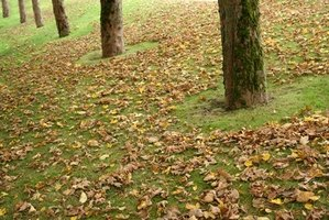 Rake your leaves into a straight-line pile instead of several smaller piles.