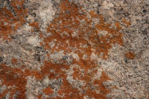 How To Get Rid Of Mold In Dirt Crawl Spaces Ehow