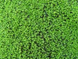 Use Of Salt To Kill Moss Ehow