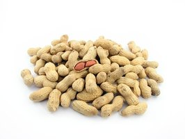 Peanuts grow two or three in a shell.