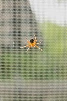 Keep spiders out of your home with sprinkles of orange scent everywhere.