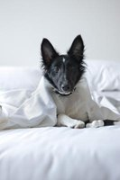 Avoid a three-dog night and use an electric blanket instead.