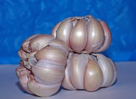 Eating garlic is good for your blood vessels.