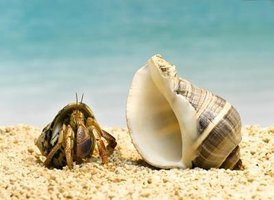 Plants give hermit crabs external stimulation.