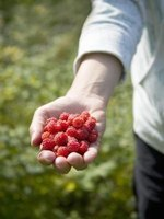 Plant raspberries in the best soil to ensure a plentiful harvest.