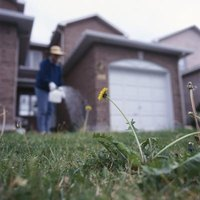 Honcho kills grass, weeds and any other plant it contacts.