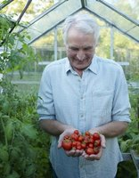 Know when to plant tomatoes and other vegetables in New Jersey.