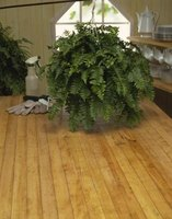 how to take care of a fern inside