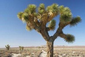 California Desert Animals & Desert Plants | eHow