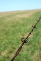 Common barbed wire